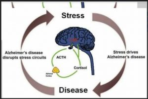 alzheimer's-disease-and-stress